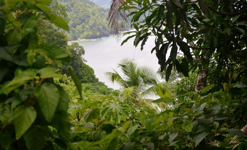 Photo: Trinidad's lush north coast. (Courtesy Caribbeanproperties.org)