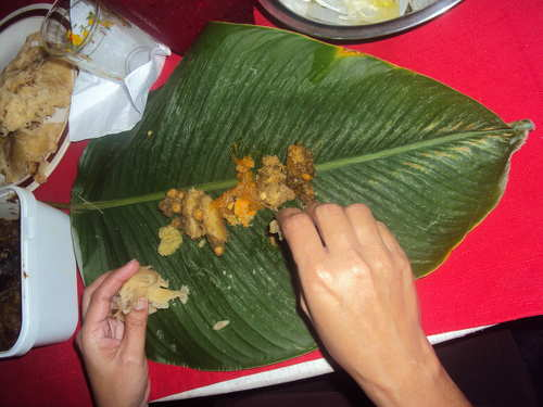 Photo: Lunch on a Soharee leaf. (Copyright Trinimummy.com)