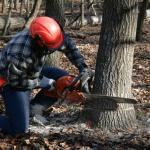 """A tree [can] fall on you resulting in instant death!"" Day in the life of a lumberjack"