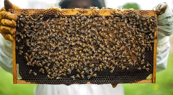 Dear Editor: T&T Bee Industry is Dying; here's how to save it