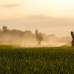 Hearn: Cocorite and environs—and God knows where else—at risk due to dangerous pesticide!