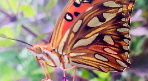 Where've the butterflies gone? Our eco-system's in danger, fixing it can also heal T&T's anger issues
