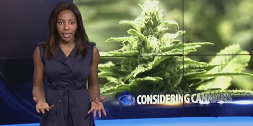 Photo: Former KTVA reporter and Alaska Cannabis Club president Charlo Greene.