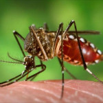 Man, mosquito and money: Raffique on Zika war and State spending