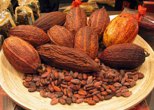 Photo: The Trinidad and Tobago cocoa industry is in a coma. (Copyright Accra Report)