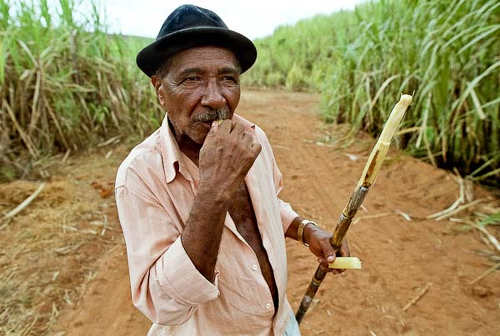 Photo: A sugar cane worker enjoys a snack on the job. (Courtesy Riomate)