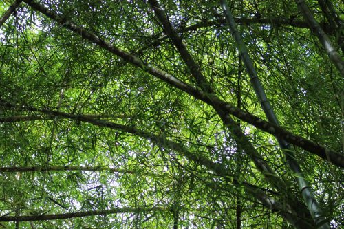 Photo: Bamboo arches on the way to the tracking station. Courtesy: Anu Lakhan