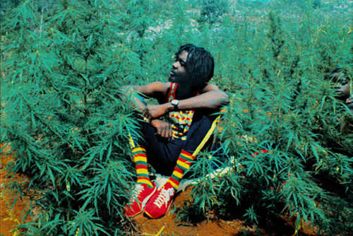 "Photo: Late reggae star Peter Tosh sits in a marijuana field for the cover of his album ""Legalize It."""